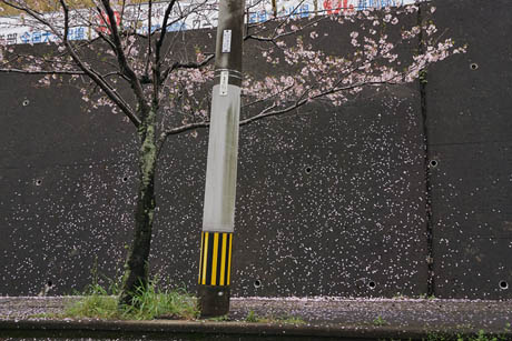 桜の花びらが壁に張り付いて、舞ってるかのように見える写真