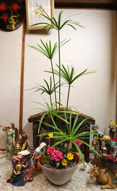シュロガヤツリの生け花